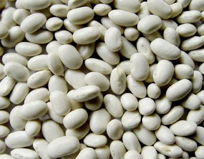 Фасоль сорт Белая плоская