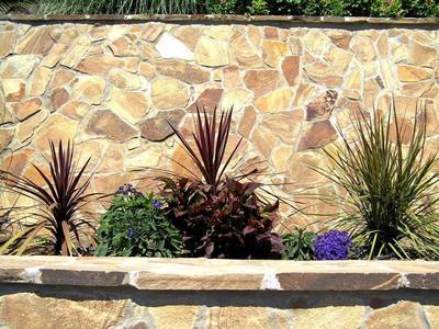 Кордилина южная Atropurpurea в террасированном саду, фото автора