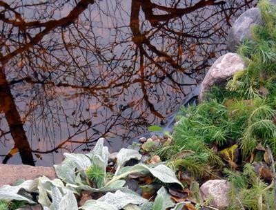 Берег осеннего водоема