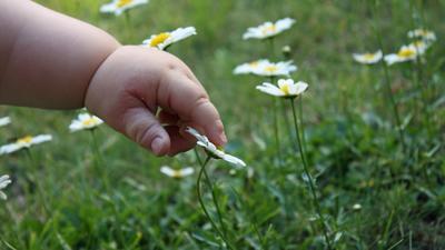 Ребенку нужно обязательно объяснить, что не все растения можно трогать