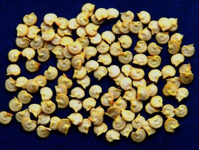 Семена перца. Фото пользователя Людмила Генералова