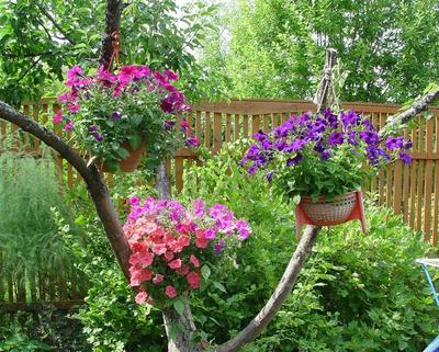 Для растений в подвесных корзинках и кашпо проблема полива стоит особенно остро