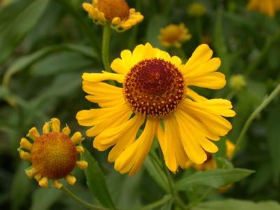 Посадка цветущего растения - довольно серьезный риск