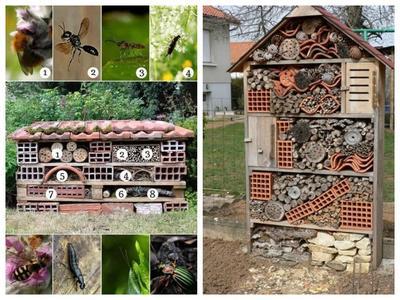 Каждому насекомому нужно создать подходящие условия