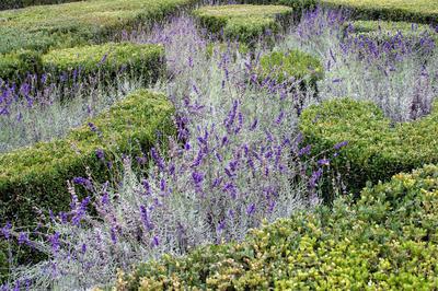 Пряные травы использовались в садовых композициях, сочетавших утилитарность с эстетической привлекательностью