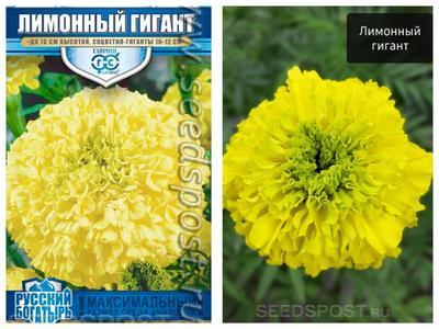 """Бархатцы 'Лимонный гигант' от """"Гавриш"""". Фото с сайта seedspost.ru, фотография справа загружена покупателем"""