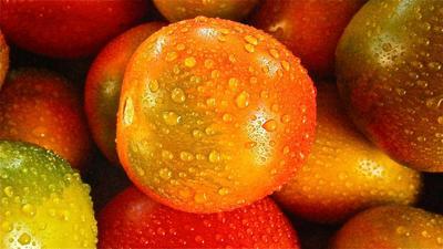 Сегодня трудно поверить, что когда-то помидор был заморской диковинкой