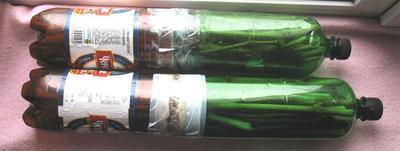 Можно хранить черенки в таком контейнере, фото с сайта poiskidey.ru