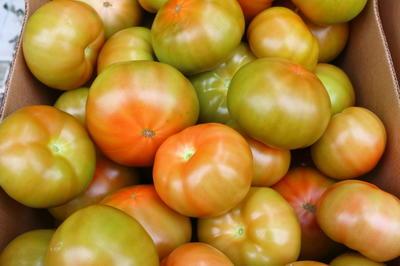 Правильное время для сбора урожая тоже важно: лучше снимать плоды с куста днем, когда на них уже не будет росы