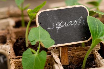 На садовой бирке указывается название растения, его сорт, дата прививки, дата посадки и прочая информация, которую садовод считает важной и нужной