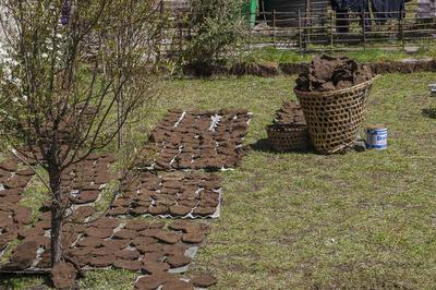 Коровьи лепёшки, предназначенные для отопления, сушатся во дворе