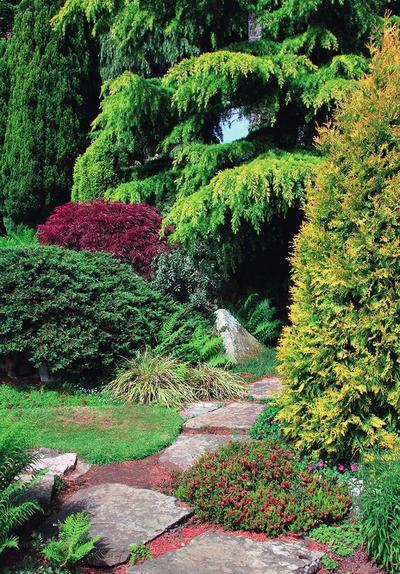 Для хвойного сада нужны растения разных видов, форм, высот и даже оттенков