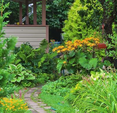 Словно в живую шеренгу выстроились зеленые хосты и папоротники, яркий бузульник и пушистая туя.
