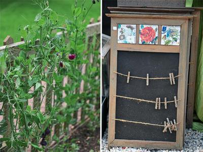Слева: душистый горошек на сетке. Справа: садовый органайзер с прищепками