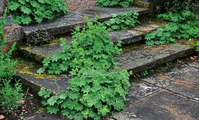 Сама природа помогает создать красивый сад с элементами непредсказуемости