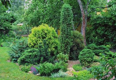 Деревья и кустарники с душистой хвоей идеальны для атмосферного сада