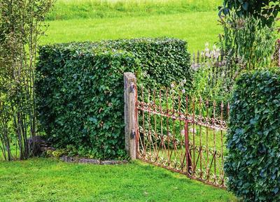 Во главу угла: живая изгородь из бука лесного прикрывает участок только по углам, остальную территорию ограничивает обычный забор.