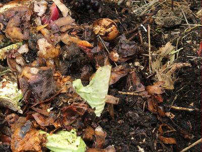 Пищевые отходы в компост