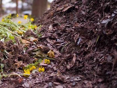 Листья и сорняки в компост