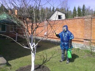 Железный купорос сочетает в себе свойства фунгицида, инсектицида и микроудобрения. фото с сайта 101dizain.ru