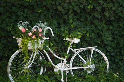 Этот велосипед уже не ездит. У него началась новая жизнь
