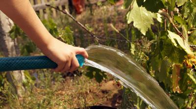 Подзимний полив важен для ягодных кустарников