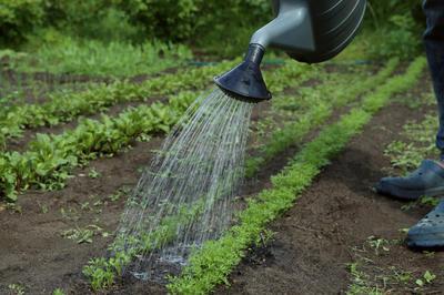 Овощи требовательны не только к плодородию почвы, но и к обеспечению влагой