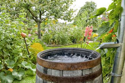 Для полива хорошо использовать дождевую воду