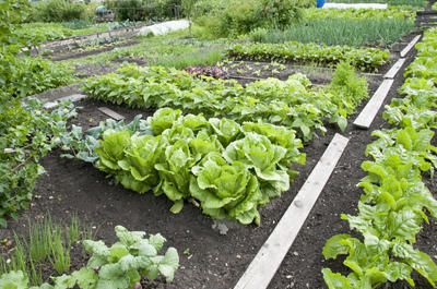 Уход за огородом - это рыхление почвы, прополки, подкормки
