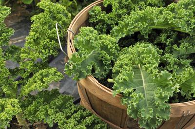 Сбор урожая лучше проводить в утренние часы