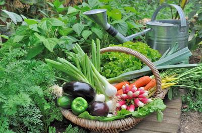 Ну разве можно устоять перед возможностью получения прибавки к урожаю?