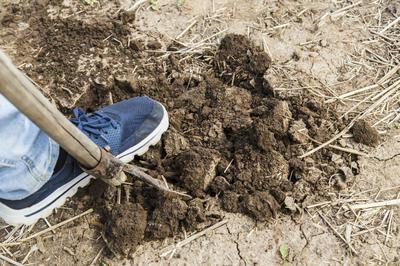 Перекопка ускорит прогревание почвы на грядке