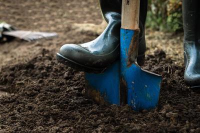 Осенняя глубокая перекопка почвы в теплице поможет победить белокрылку