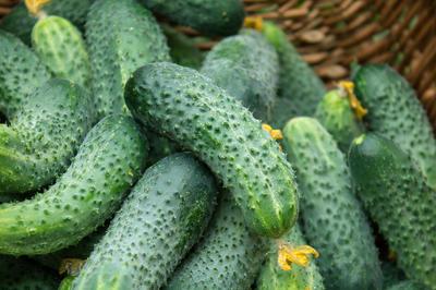 Плоды современных сортов и гибридов горчат гораздо реже
