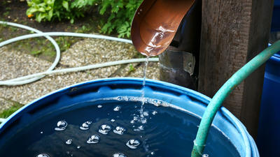 Для полива нужно использовать воду, которая отстоялась в бочках