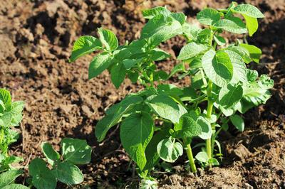 Растущие зеленые организмы требуют дополнительного питания