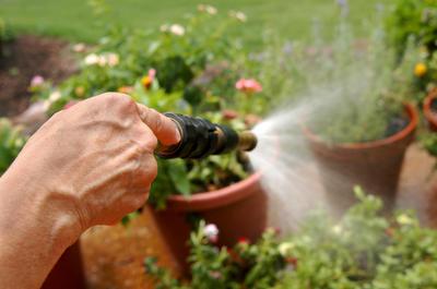 Обливание растений надо проводить не струей, а с помощью распылителя