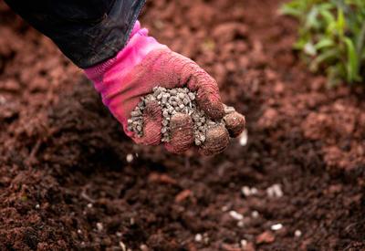 В посадочные ямы хорошо добавлять гранулированный помет