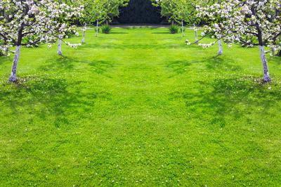 Трава под деревьями — практично и красиво