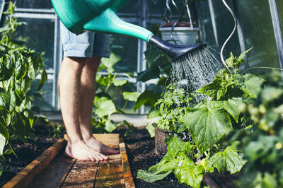 Каждый огородник сам принимает решение, когда лучше поливать