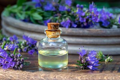 Иссоп — лекарственное растение
