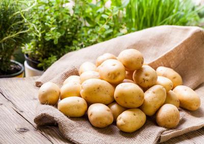 Хороший картофель уродился