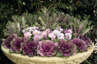 С капустой можно создать красивую контейнерную композицию. Фото с сайта pennlive.com