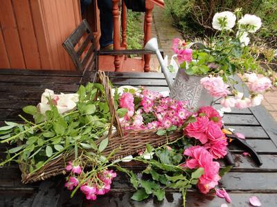Последние розы. Фото автора