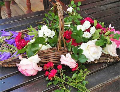 Необходимо как можно больше знать о тех розах, которые собираетесь купить. Фото автора