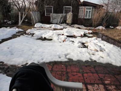 Начало весны. В саду еще лежит снег. Открываем торцы укрытий. Фото автора
