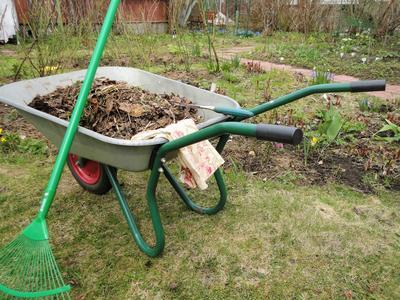 Проводим генеральную уборку в розарии. Фото автора