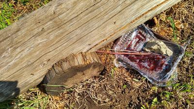 Подвинула варенье поближе к муравьям, дополнительно положив ещё удобные палочки. Фото автора
