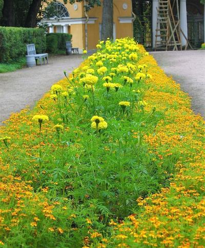 Ступенчатое расположение растений в рабатке. Фото с сайта miremonta.ru