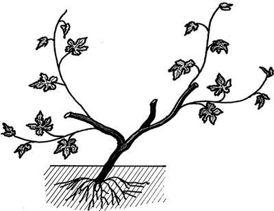Весна третьего года. Фото из книги Сад и огород. Секреты легких урожаев